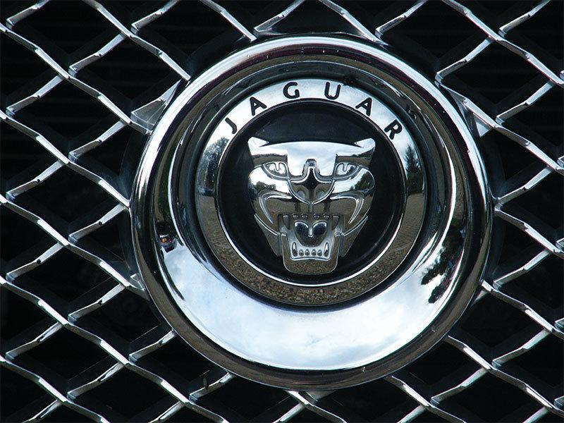 Image jaguar4